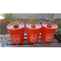03/26/2018 Experiment on growing food in bucket of water
