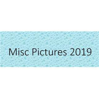 Misc Pictures 2019